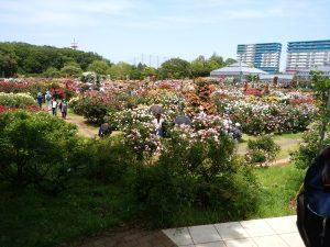 京成バラ園の2018春のバラ