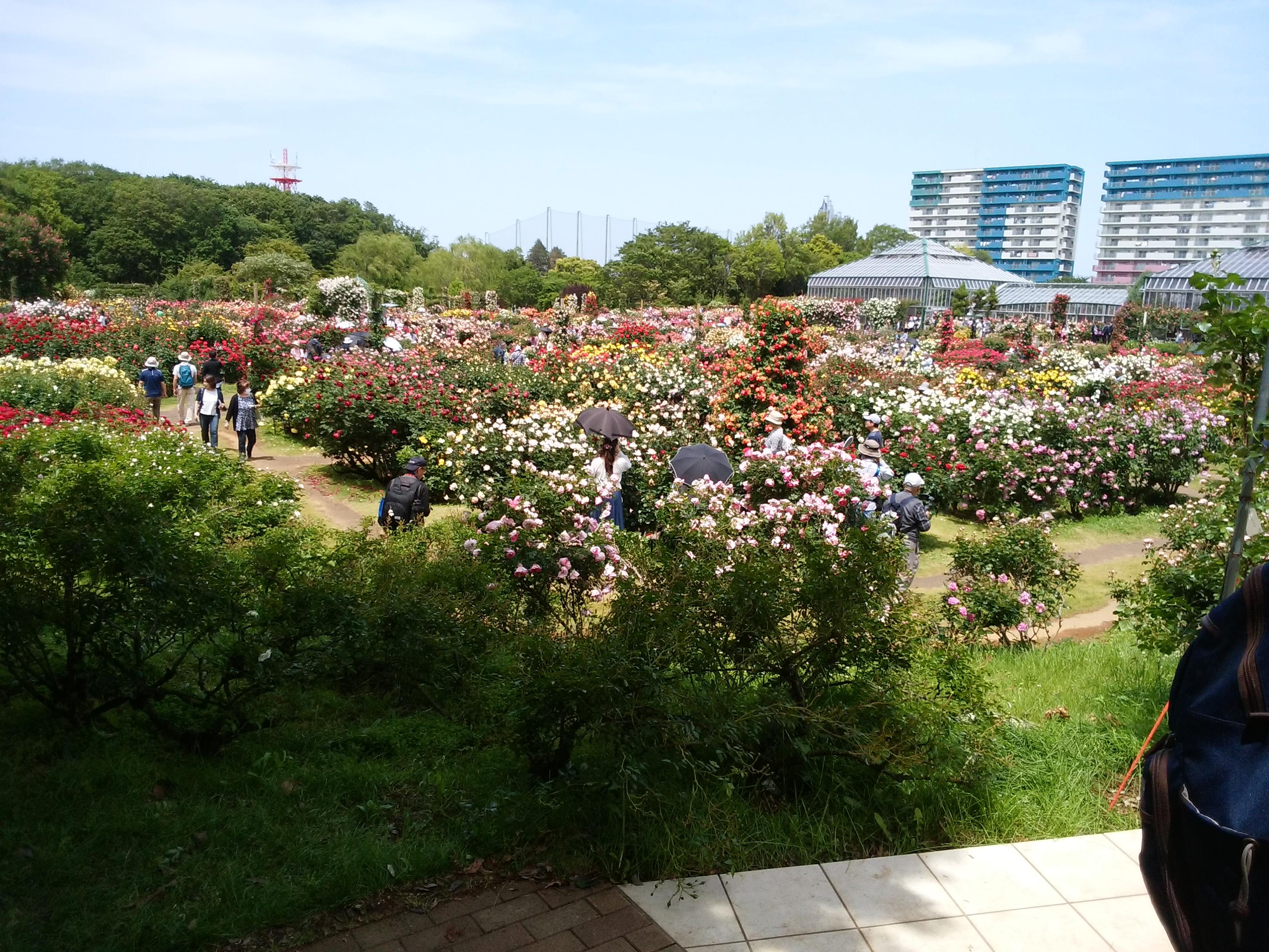 京成バラ園の春の花